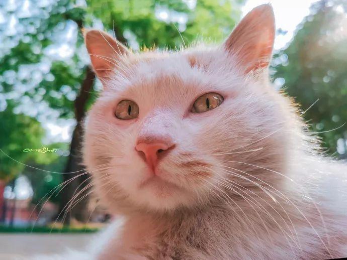 而且每只猫,都有自己的名字和编号 ▼ 因为长相喜得名的