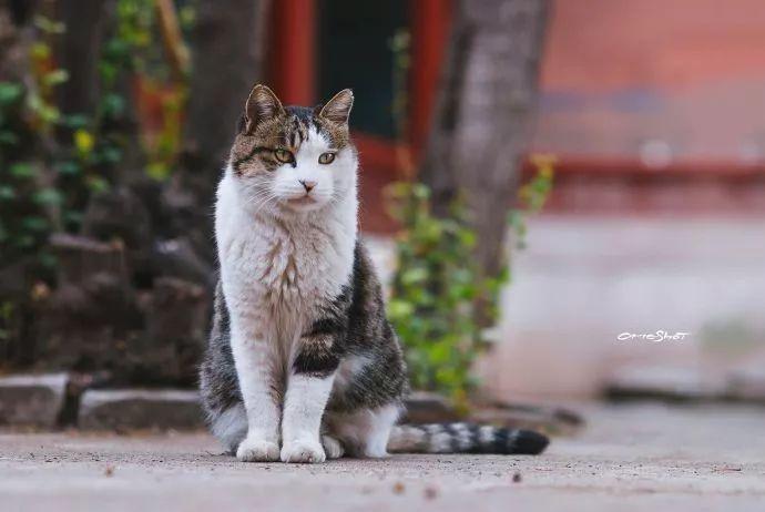 守护故宫10年的御猫小崽儿,走了.