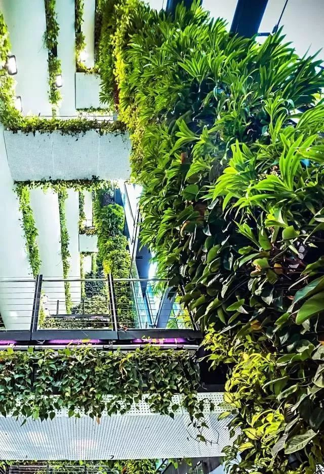 新加坡垂直绿化竟然这么美 怪不得全世界都在学习