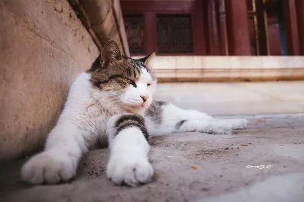 壁纸 动物 猫 猫咪 小猫 桌面 440_293
