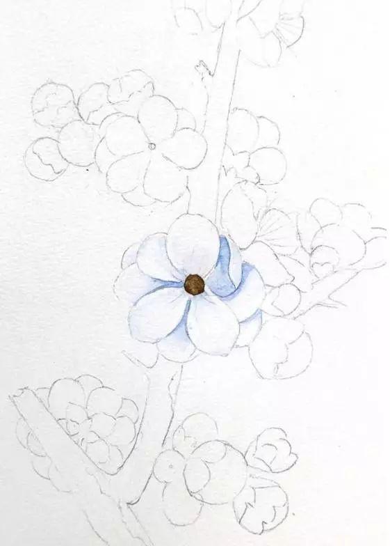 教程| 水彩梅花手绘教程