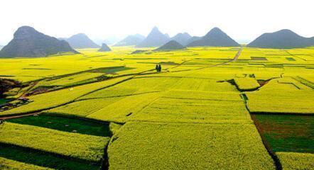 农村投资小风险低前景好的创业项目