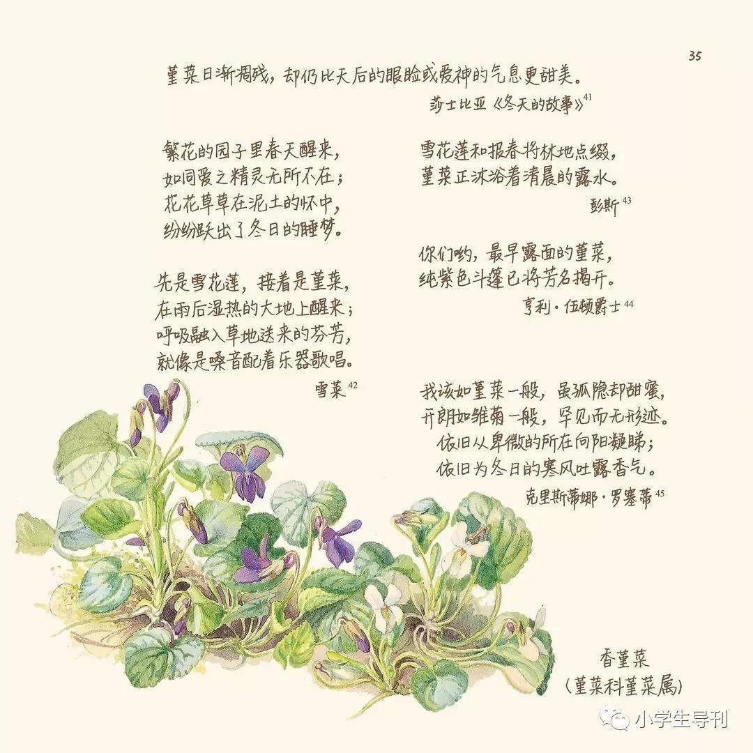 自然观察手绘日记