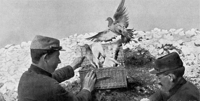 抗战时期,此种动物比日军威胁还大,我军为此专门安排士兵捕杀
