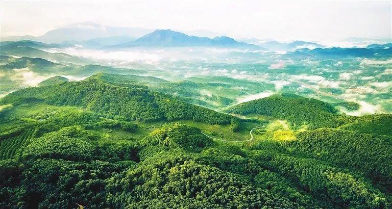 """白沙黎族自治县委书记刘蔚:依托生态优势 做好""""两山""""转化文章"""