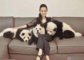 奇闻:女子家里养了三只宠物网友:叫声出卖了自己