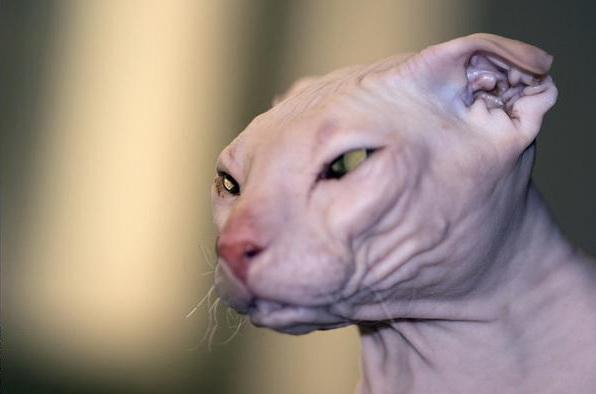 拉邦猫互动平台图片