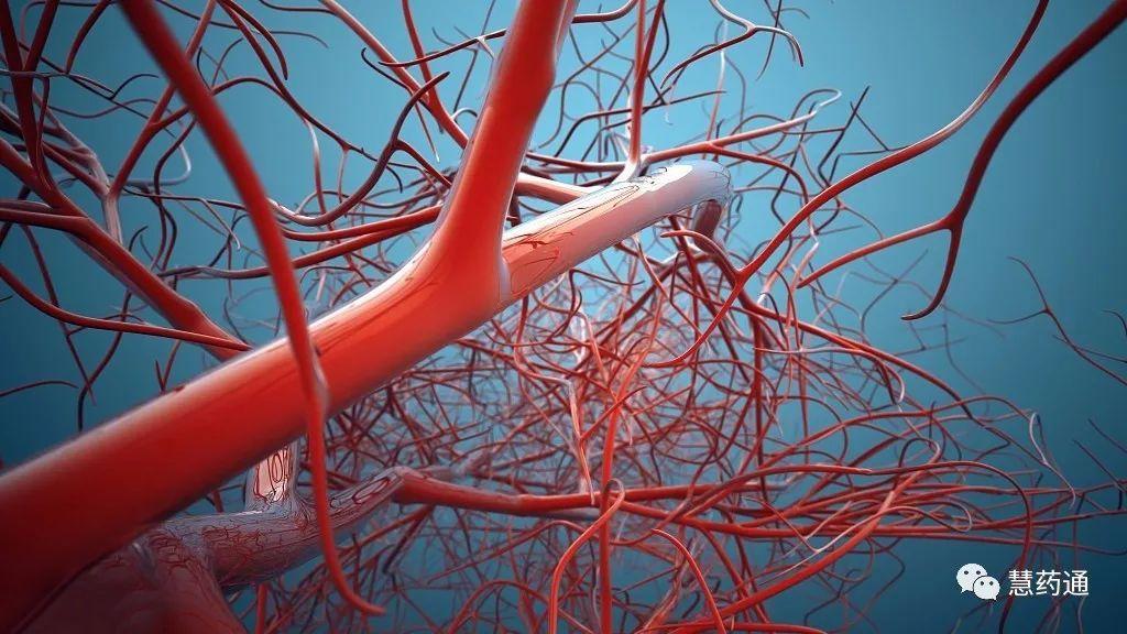 人体八大系统——血液循环系统图片
