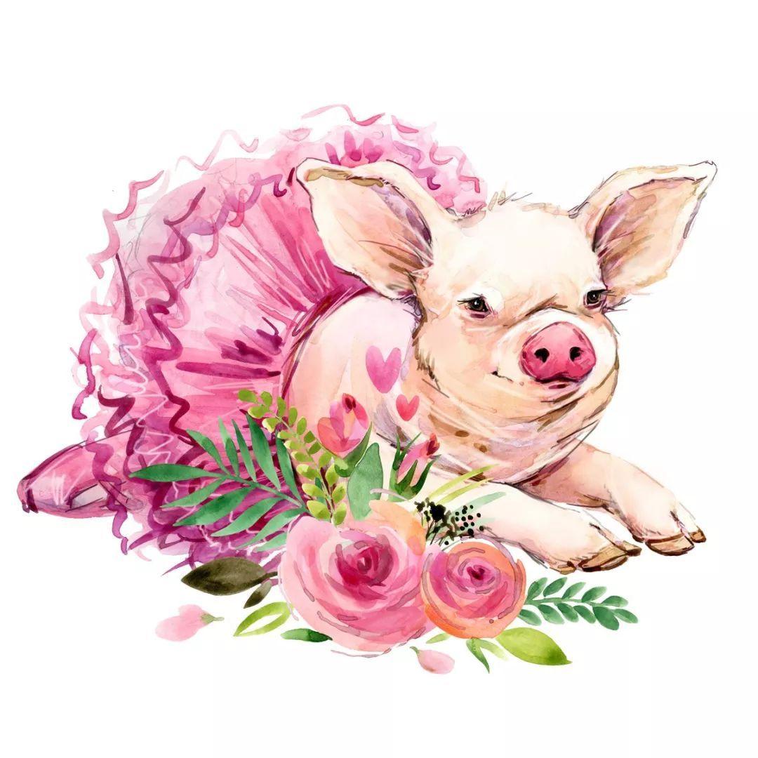 简洁可爱猪的手绘图片