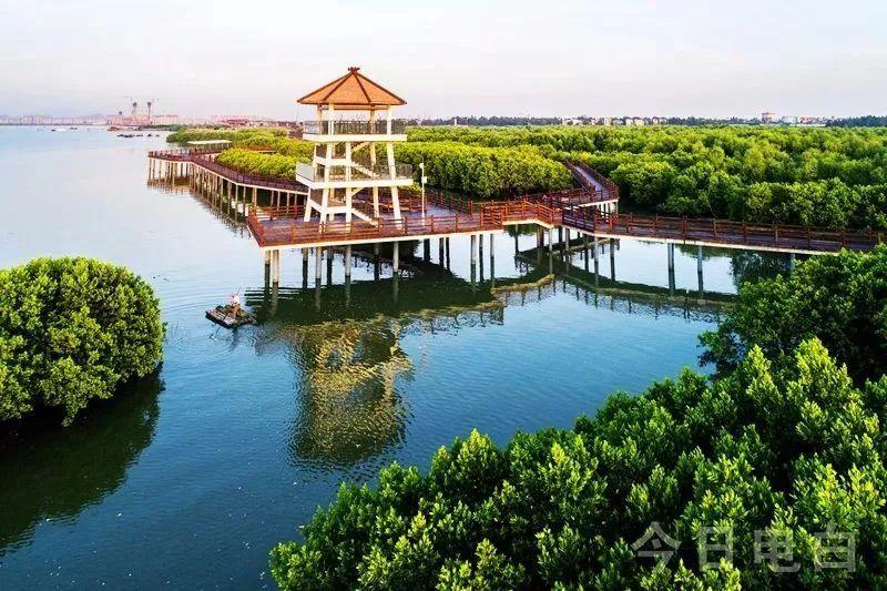 """电白水东湾红树林湿地被评为""""广东十佳观鸟胜地""""!_茂名图片"""