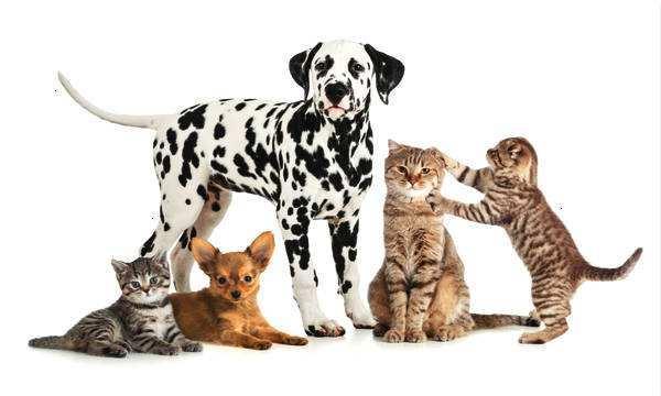 建设开发一个宠物交易电商平台/猫狗销售B2C商城平台建设开发费用多少钱?