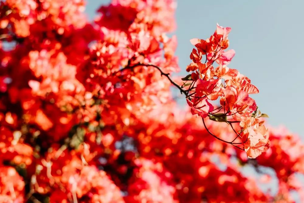 今生,总有一个人是为你而来,   他一定能合上你生命的节拍,不管你的人生摆动出怎样的姿态,他都会尽力配合你舞出最美的风采,哪怕此生无人给你鲜花和掌声,他也会让你始终激情澎湃,微笑一直在你的眉间和心上绽开.