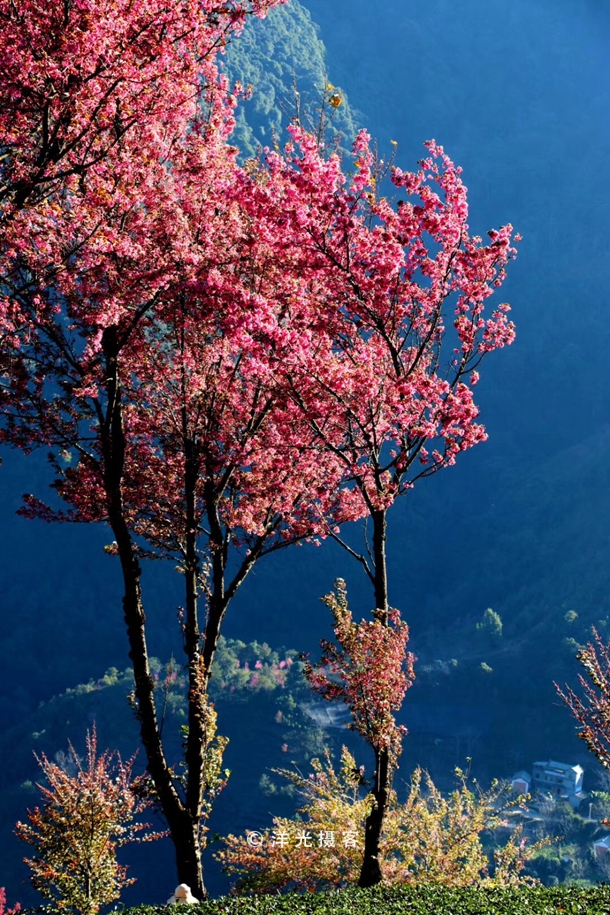 岁末云南的这个地方,竟有着如此诗情画意般的冬天