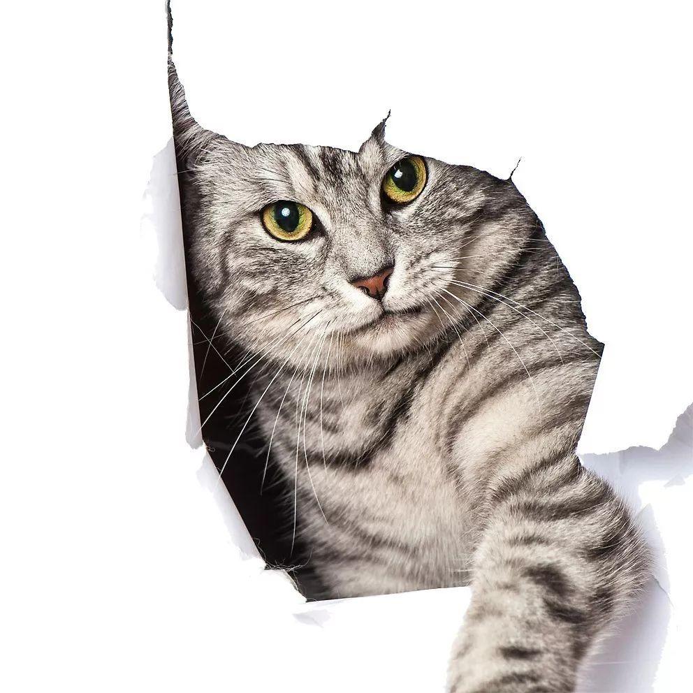 怎么让两只猫快速相处图片