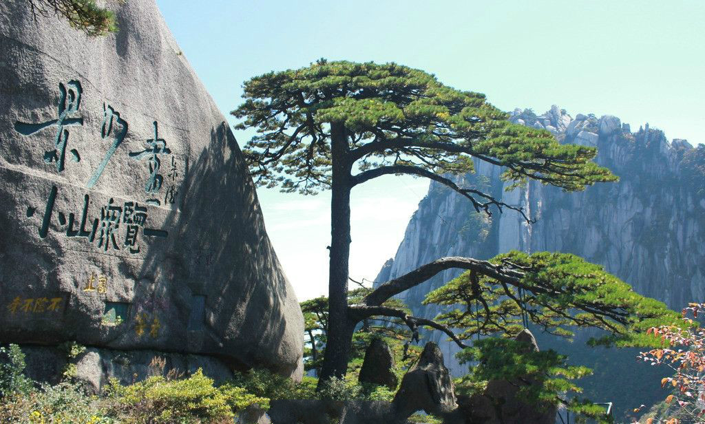 地球上霸气10棵树:六棵在中国,价钱无法估量,1棵是李世民栽种 作者: 来源:李不言说旅游