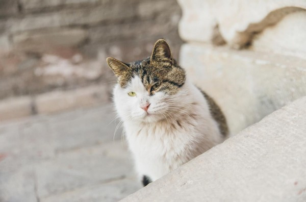 哈哈哈哈哈哈哈哈 特别开心的是 我竟然遇到了吃皇粮的猫 话说故宫里