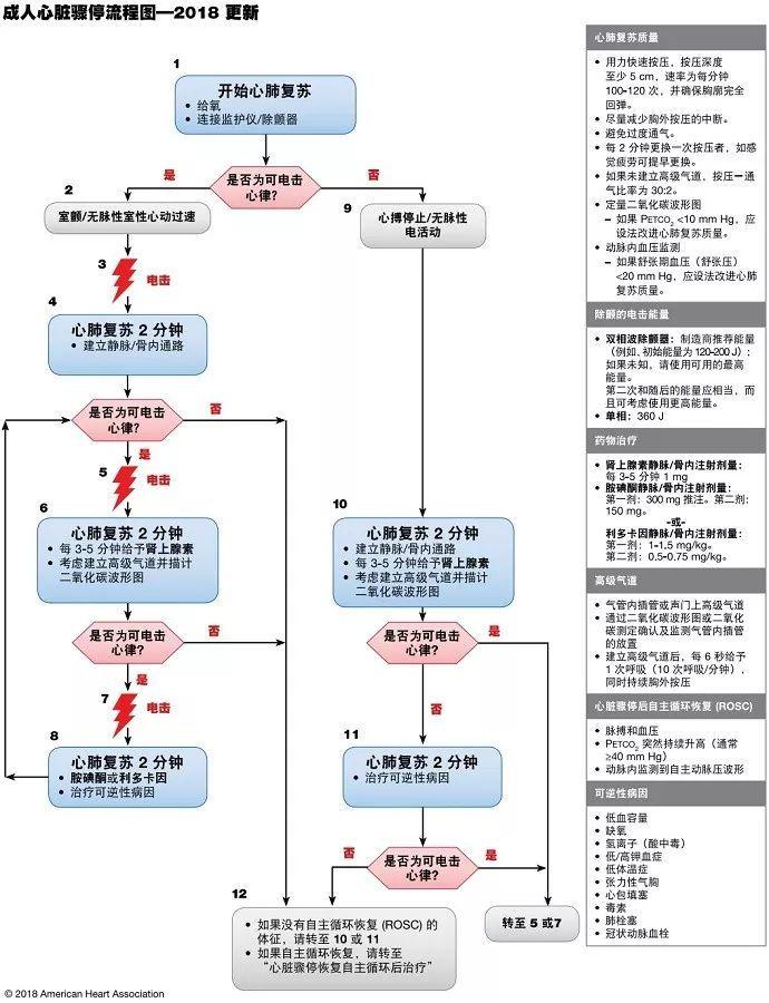 成人三级囹�a�)�h�_成人心脏骤停环形流程图