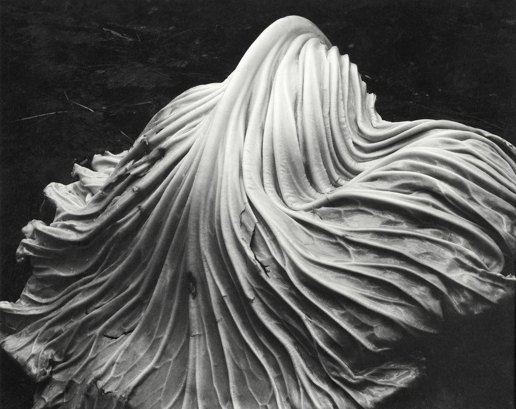 方男人人体艺术_从人体艺术家到静物大师,他是摄影史上不可多得的天才