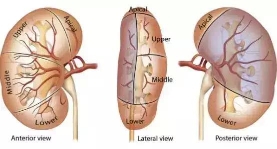 肠道水肿是什么症状