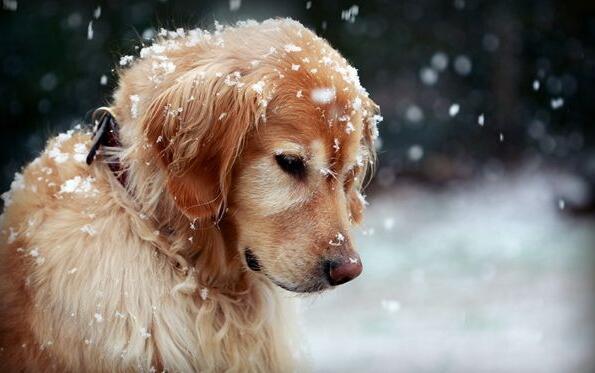 天气很冷,这样养狗,只会害了它!