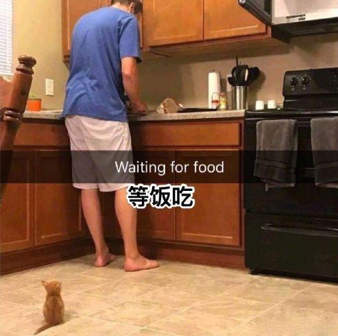 火热的开饭现场,猫群中竟偷偷混进了一个另类......