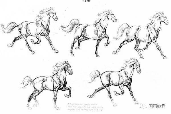 画马技法与马的结构素描图片