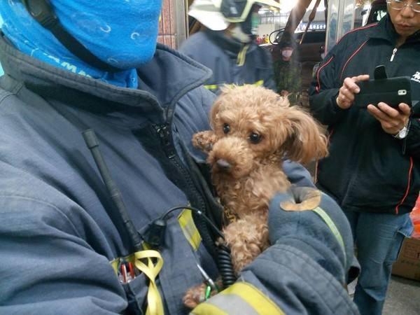 不瞒你说,这5种东西对泰迪犬来说是克星,绝对会害怕!