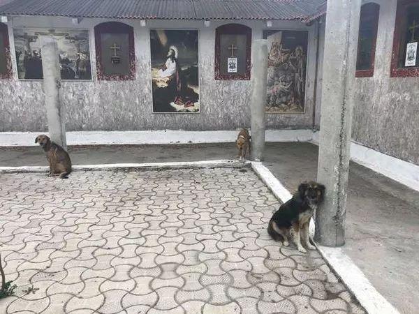罗马尼亚一个教堂里,栓了18条骨瘦如柴的狗,被志愿者救出