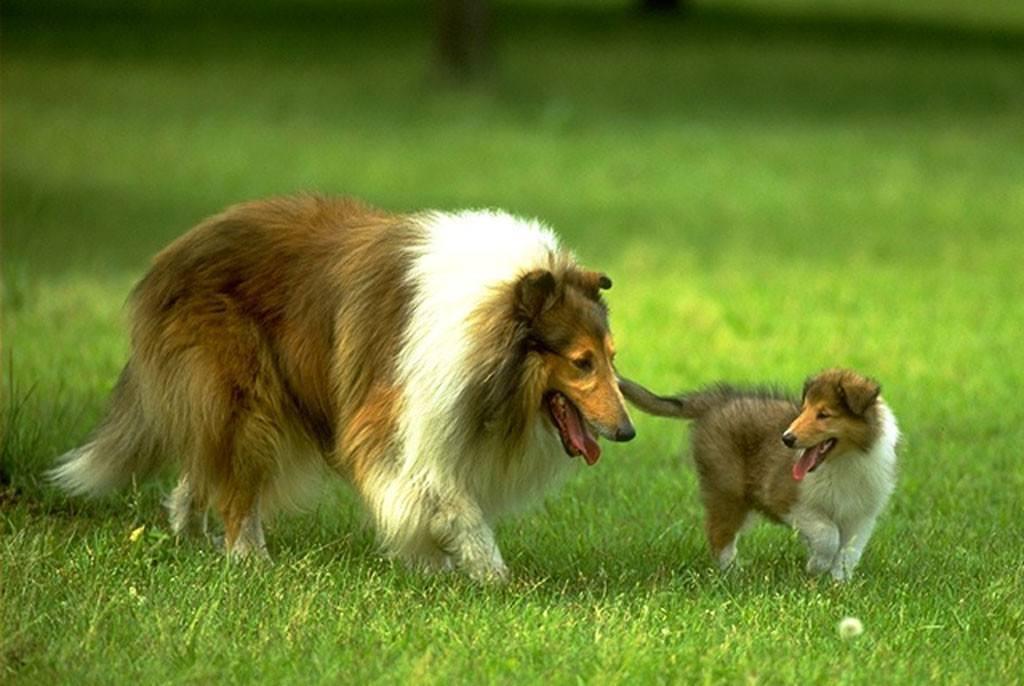 宠物狗名字大全,各种奇葩的,辣眼睛的,时代感的名字齐上阵 狗狗