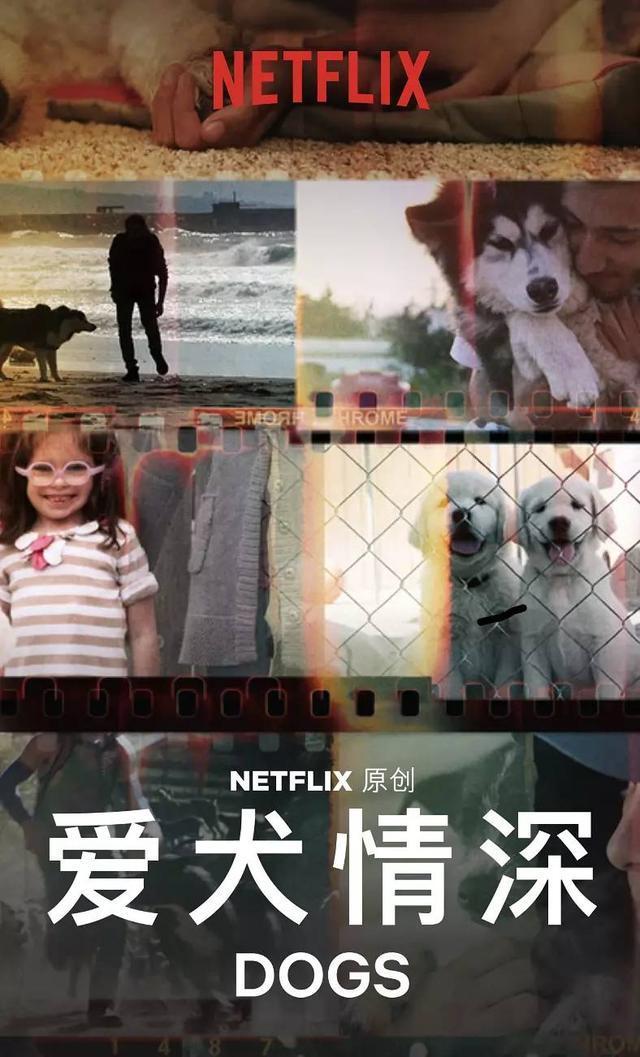 这8部纪录片,部部豆瓣9分以上,寒假和孩子看起来!