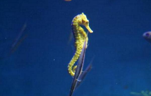 地球上10大最漂亮的热带鱼,小丑鱼和神仙鱼上榜,你最喜欢哪种