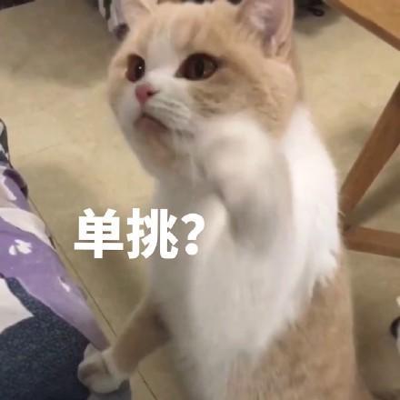 猫咪表情包:你不对劲,小老弟图片