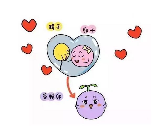 受精卵著床有感覺嗎?如果身體有這5種反應,很有可能是懷孕了! 親子 第1張