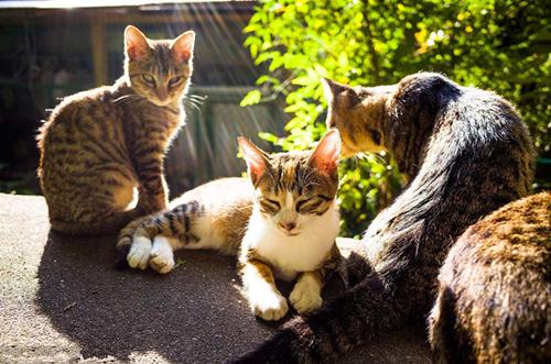 养宠知识:鼻支母猫生产无一幸免,鼻支母猫生产无一幸免吗?