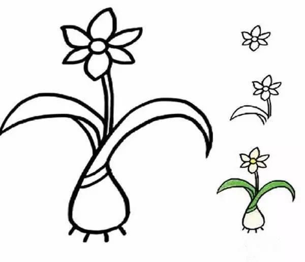 少儿简笔画植物-水仙