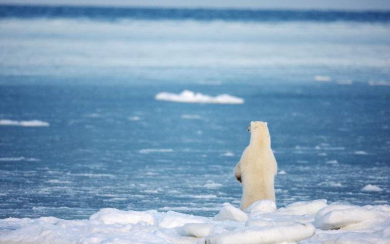 住在北极的因纽特人,长着黑头发黄皮肤,为了生存让妻子招待外人