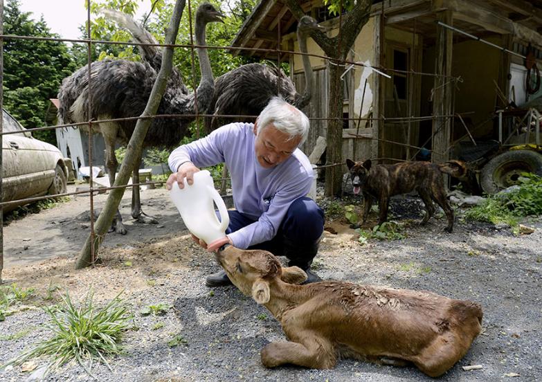可怜小动物因核泄漏被困无力生还,好心老爷爷照顾治疗不离不弃