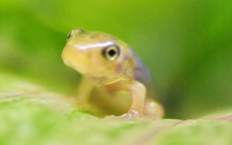 小蝌蚪变青蛙王子图片