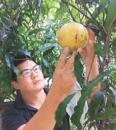 逐梦大陆收获瓜甜果香