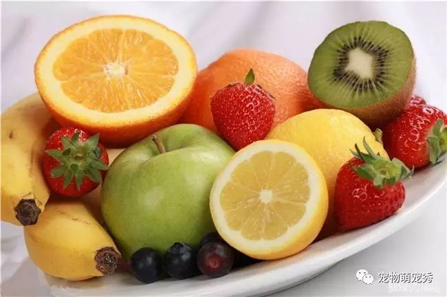 狗狗能吃的蔬菜和水果!以及哪些食物寵物狗不能吃? 萌寵 第7張