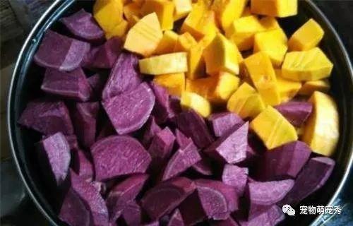 狗狗能吃的蔬菜和水果!以及哪些食物寵物狗不能吃? 萌寵 第2張