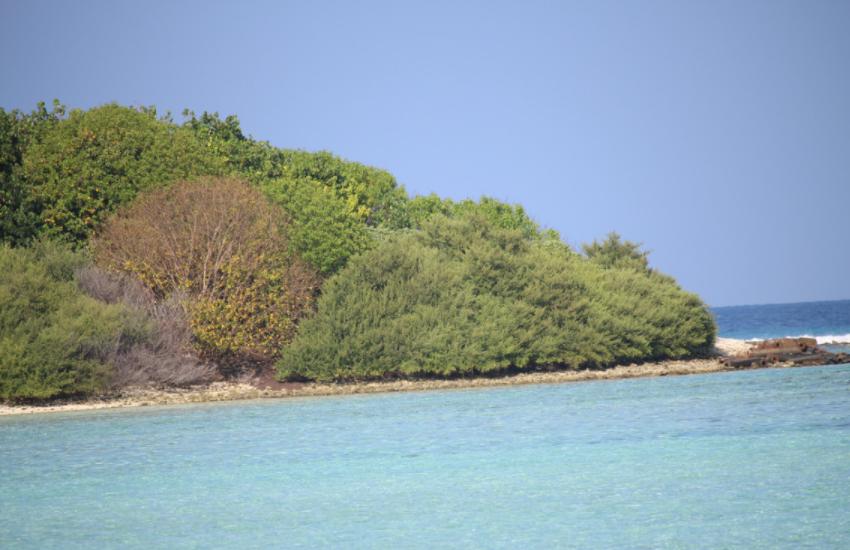 全球最划算小岛,近200公亩只卖4300元,却无人问津 作者: 来源于:旅途奇闻