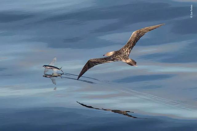 一张简单的海鸟捕鱼照片赢得国际摄影大师如此评价