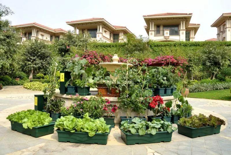 楼顶菜园设计图片欣赏