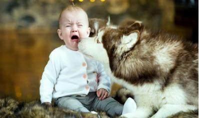 暖心!3岁女童给宠物狗盖被子 父母却遭网友抨击