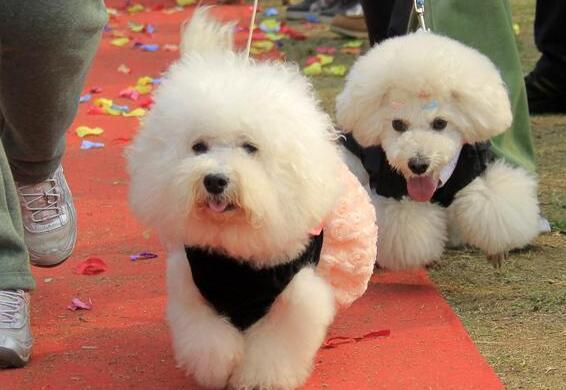小編告訴你:一只健康的狗狗,一天需要拉幾次便便! 萌寵 第5張
