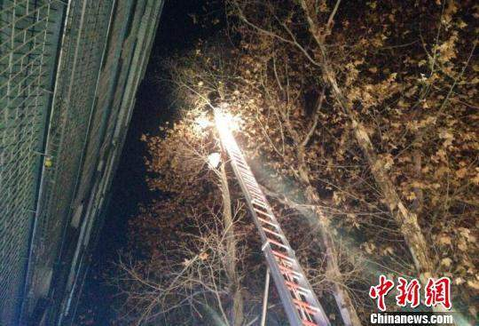 湖北襄阳:男子爬树救流浪猫被困 消防架梯救人