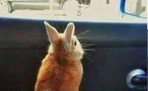 看不到窗外的兔嘰,真是被萌暈!