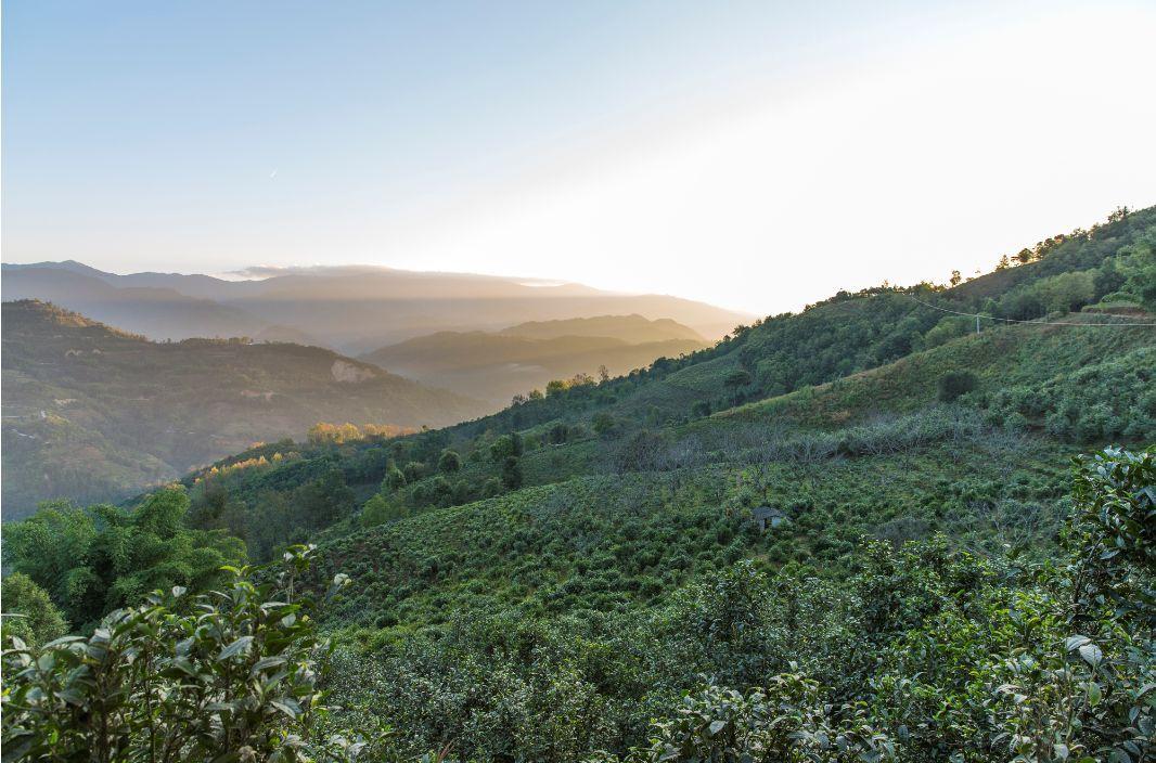 这一杯在线娱乐-欢迎您龙珠茶来自深山古树的春天带你1秒去往高山阔野超惊艳!