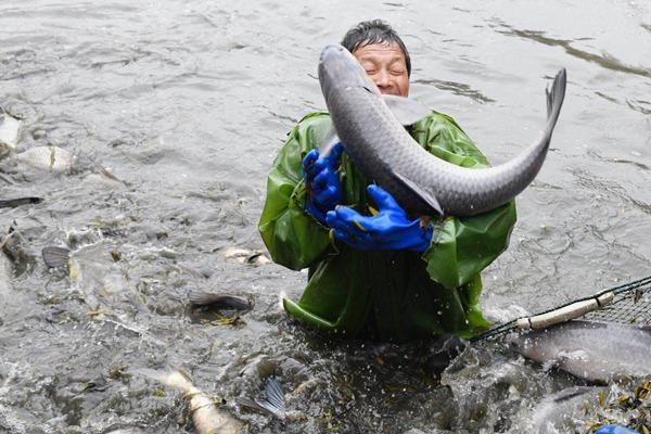 热文:湖州:千年古村的鱼文化